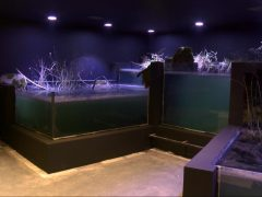 aquatika_akvarij