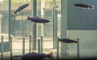 akvarij-karlovac