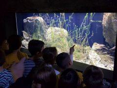 djeca_akvarij
